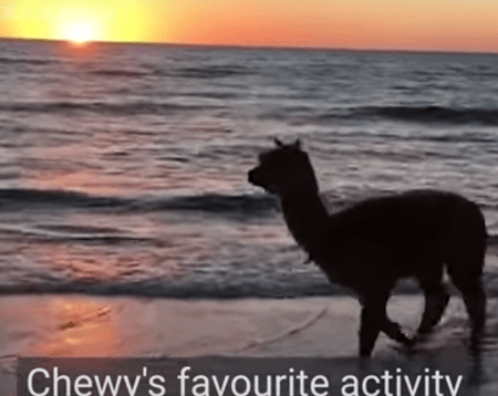About Alpaca Beach Gifts